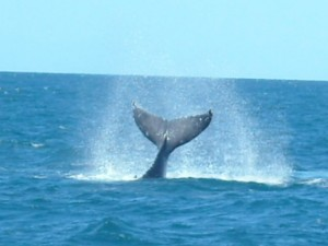 whitsunday_islands_wildlife_14.jpg