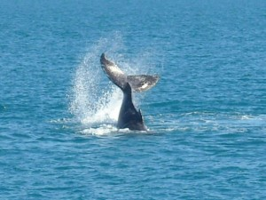 whitsunday_islands_wildlife_37.jpg
