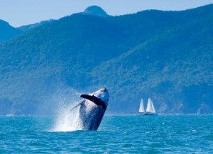 whitsunday_islands_wildlife_56.jpg